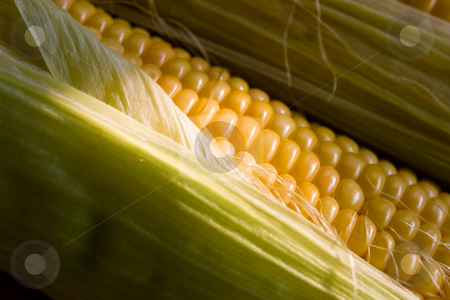 Maize stock photo, Vegetables series: two ears of golden maize by Gennady Kravetsky