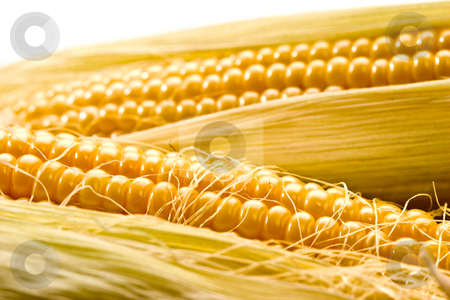Golden corn stock photo, Vegetable series: macro picture of golden corn by Gennady Kravetsky