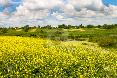 Summer landscape stock photo, Nature series: summer landscape with flowers and pond by Gennady Kravetsky