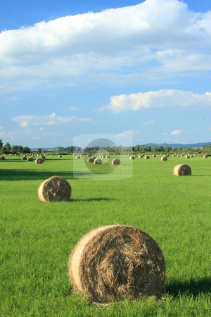 Stil-life stock photo, Bales of hay as long as the eye can see by ARPAD RADOCZY