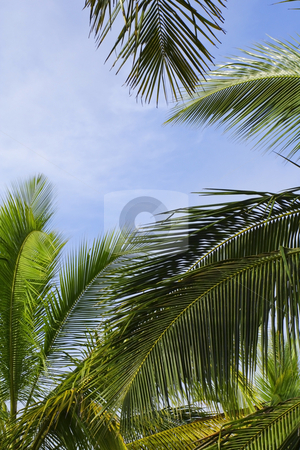 Palm fronds against a blue sky stock photo, Bright green palm fronds against a blue sky by Mike Smith