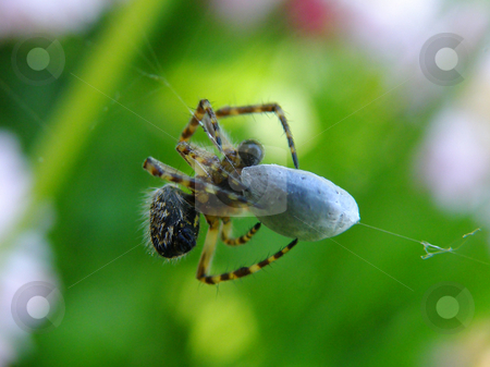 The spider finishes with a victim stock photo, The spider finishes with a victim by Andrey Ivanov