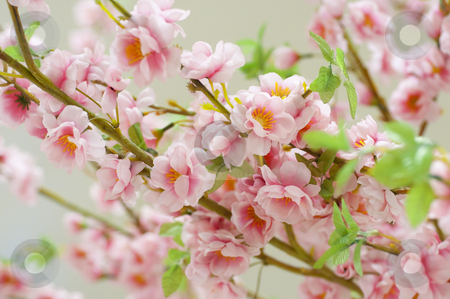 Petals of a blossoming tree stock photo, Petals of a blossoming tree by Andrey Ivanov