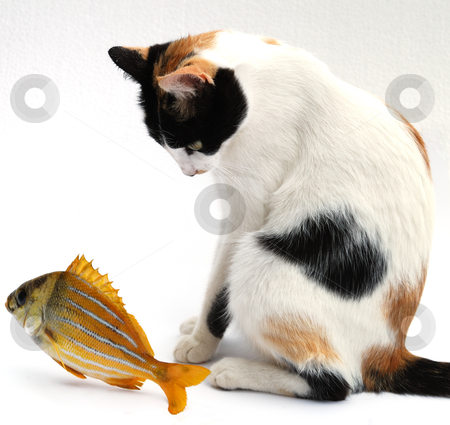 Goldfish and cat stock photo, The goldfish carries out desires of a cat by Nataliya Taratunina