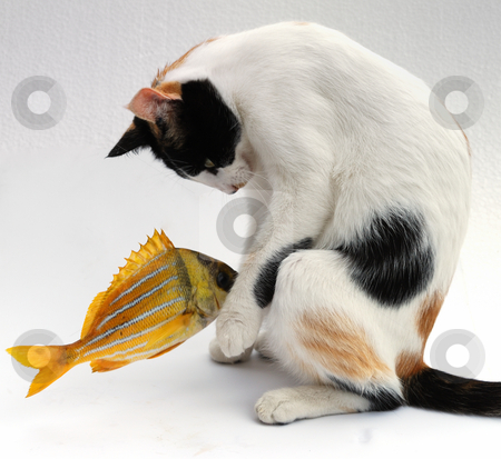 Cat and goldfish stock photo, The goldfish carries out desires of a cat by Nataliya Taratunina