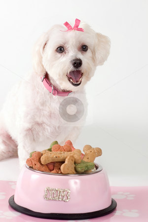 Barking Dog stock photo, Barking dog sitting by a bowl of dog food by Leah-Anne Thompson