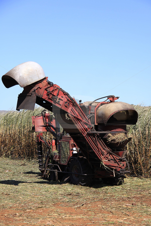 Sugarcane harvester stock photo, Sugarcane harvester at work on a bright sunny day by Gowtum Bachoo