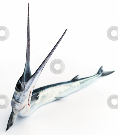 Fish saw stock photo, Fish with an open mouth on white background by Nataliya Taratunina