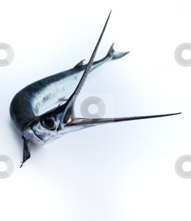 Fish saw stock photo, Head with teeth of fish-saw on white background