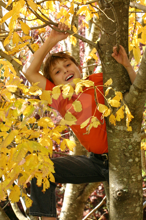 Child climbing in the tree branches stock photo, A child climbs among the branches of a deciduous tree in autumn. by Leah-Anne Thompson