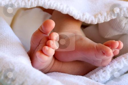 Baby Feet stock photo, New Born Baby feet in a white blanket by Vanessa Van Rensburg