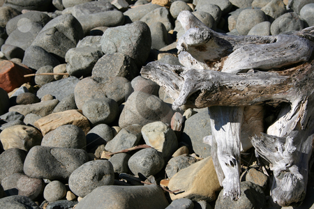 Rocky Background stock photo, Large Seaside pebbles with a broken piece of tree stump by Vanessa Van Rensburg