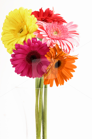 Gerberas in Vase stock photo, Variety of Gerberas in vase