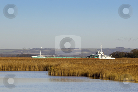 Freighter sailing through the reeds stock photo, A cargo ship passing reed beds on its way up the river ouse to the port of goole in east yorkshire by Mike Smith