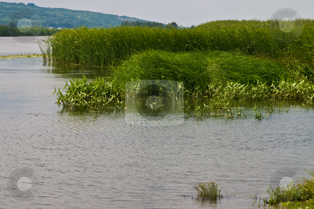 River stock photo, View series: big river side with bush in ukraine by Gennady Kravetsky