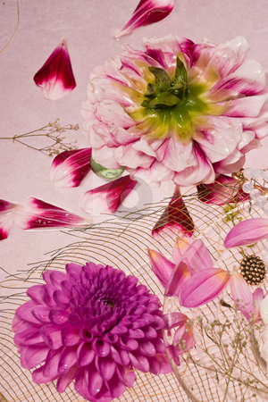 Lilac dahlia stock photo, Flower series: still life with dahlia and beads by Gennady Kravetsky