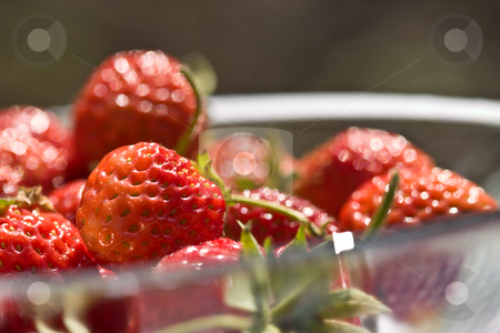 Strawberry stock photo, Food series: freshly grown tasty strawberry on bowl by Gennady Kravetsky
