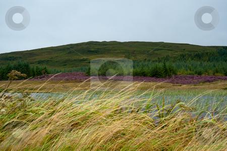 Eilean Mor Loch Finlaggan stock photo, Eilean Mor Loch Finlaggan, seat of the Lord of the Isles by Jaime Pharr