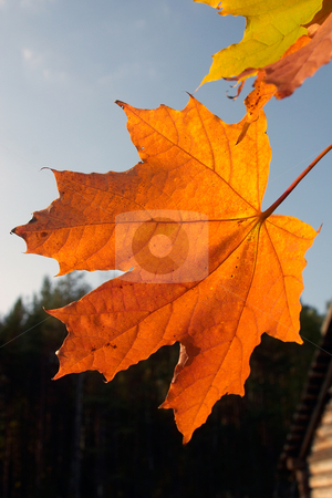 Autumn Leaves stock photo,  by Stanislovas Kairys