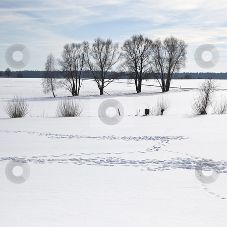 Snow stock photo, A photography of a scenery covered in snow by Markus Gann