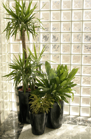 Indoor Plants stock photo, Indoor potted plants by a glass brick wall by Leah-Anne Thompson