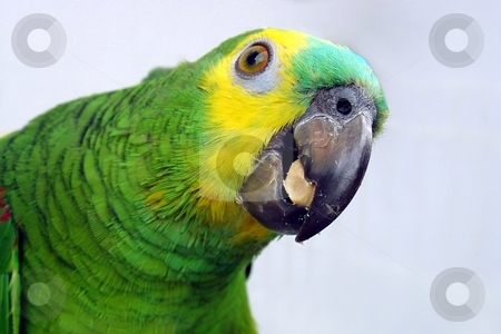 Parrot eating stock photo,  by Giancarlo Liguori