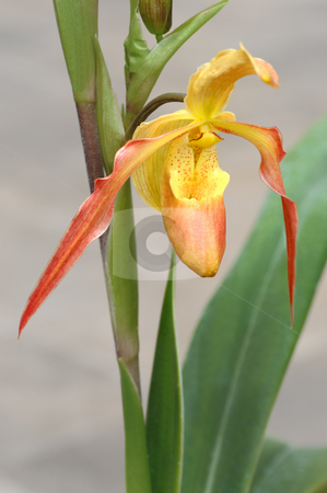 Tropical flowers stock photo, Tropical flowers in the park