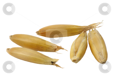 Oats stock photo, Seeds of oats close up on a white background. by Vladimir Blinov