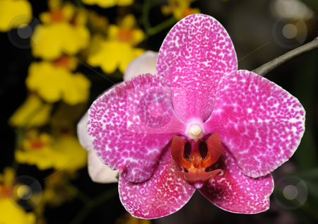 Orchids stock photo, Tropical flowers in the park