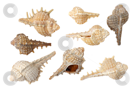 Seashells stock photo, Different sea shells on a white background by Vladimir Blinov