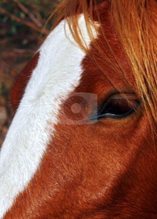 Eye of a Horse stock photo, Close up portrait of horses face and eye by Robert Ford