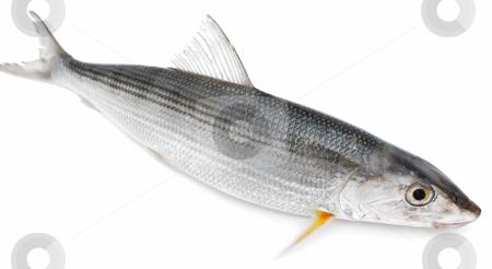 Fresh fish stock photo, Fresh fish on a white background by Nataliya Taratunina