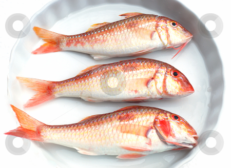Red fishes stock photo, Three red fresh fishes on a white dish by Nataliya Taratunina