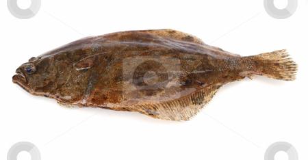 Fish flounder stock photo, Fish flounder on white background by Nataliya Taratunina