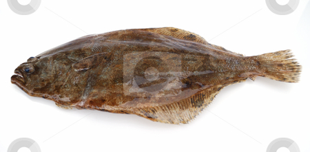 Flounder fish stock photo, Fish flounder on white background by Nataliya Taratunina