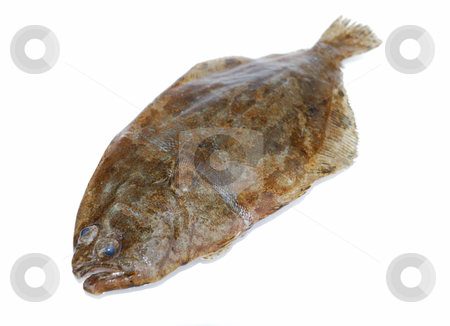 Fish flounder stock photo, Fish flounder on white background by Nataliya Taratunina