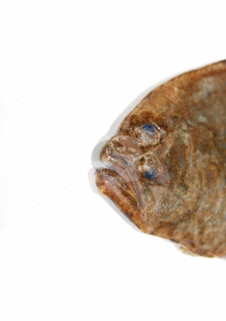 Flounder's face stock photo, Fish, Flounder's face on white background by Nataliya Taratunina