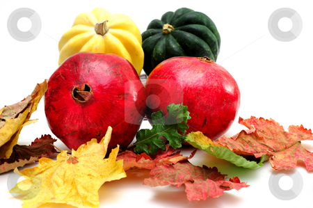 Pomegranate stock photo, Green and yellow Acorn squash with Autumn Pomegranates and colorful fall leaves isolated on a white background by Lynn Bendickson