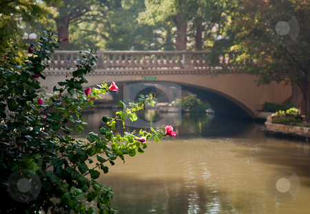 Bright red flowers in front of bridge in San Antonio stock photo, River walk in San Antonio with the river and bridge framed by bright backlit flower by Steven Heap