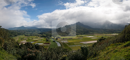Panorama of Hanalei Valley on Kauai stock photo, Kauai's Hanalei Valley in wide panorama format showing the flooded taro fields by Steven Heap