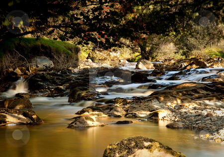 Peat laden river in secluded Welsh Valley stock photo, Beautiful peat laden river in verdant Welsh valley by Steven Heap