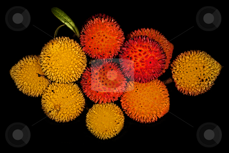 ... almost perfect strawberry tree fruits stock photo, ... a lost fruit project by emiliano beltrani