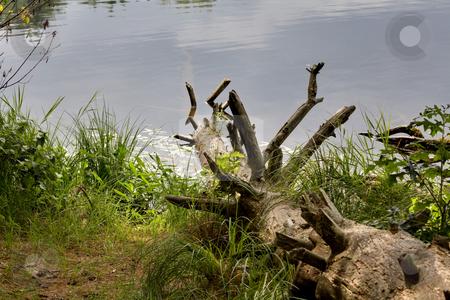 On the lake stock photo, On the lake near Boston by Artur Staszewski