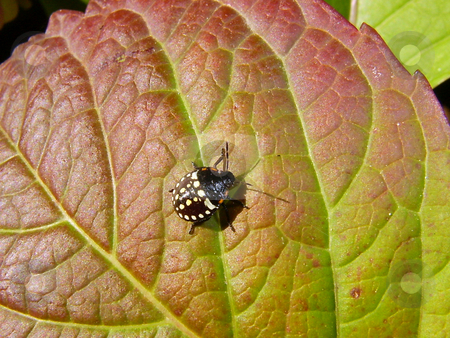 The small bug on a leaf stock photo, The small bug creeps on a leaf by Vadim Tsyba