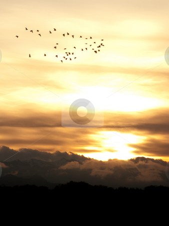 Sunset stock photo, Group of birds flying over at sunset ver the pyrenees mountains by Laurent Dambies