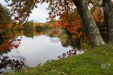 New England Foliage stock photo, A gorgeous autumn scene with a lake and trees showing the bright colors of fall in New England. by Todd Arena
