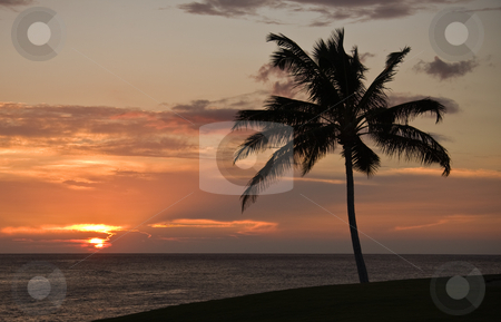 Sunset over the sea stock photo, Sunset on Hawaii with a palm tree in the foreground by Steven Heap