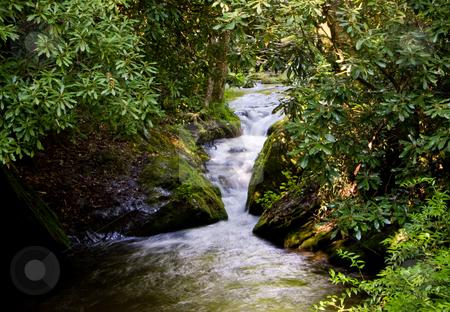 Rushing River through narrow gorge stock photo, Rushing river through narrow gap in wooden area by Steven Heap