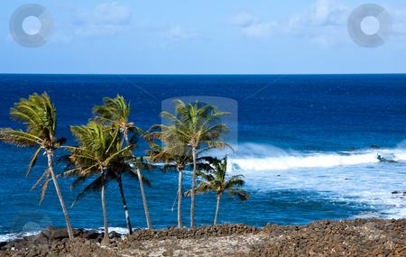 Windswept palm trees by raging ocean stock photo, Windswept palm trees by raging ocean by Steven Heap