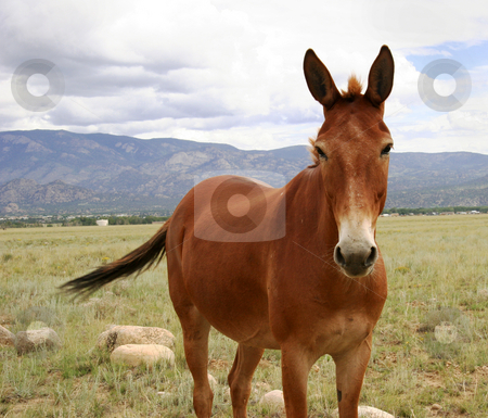 Horse in meadow in Colorado stock photo, Close up of brown horse in a field in Colorado by Steven Heap